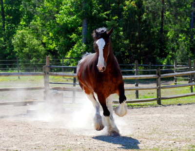 Equine Exam Services from Michael J. Suit, DVM, LLC